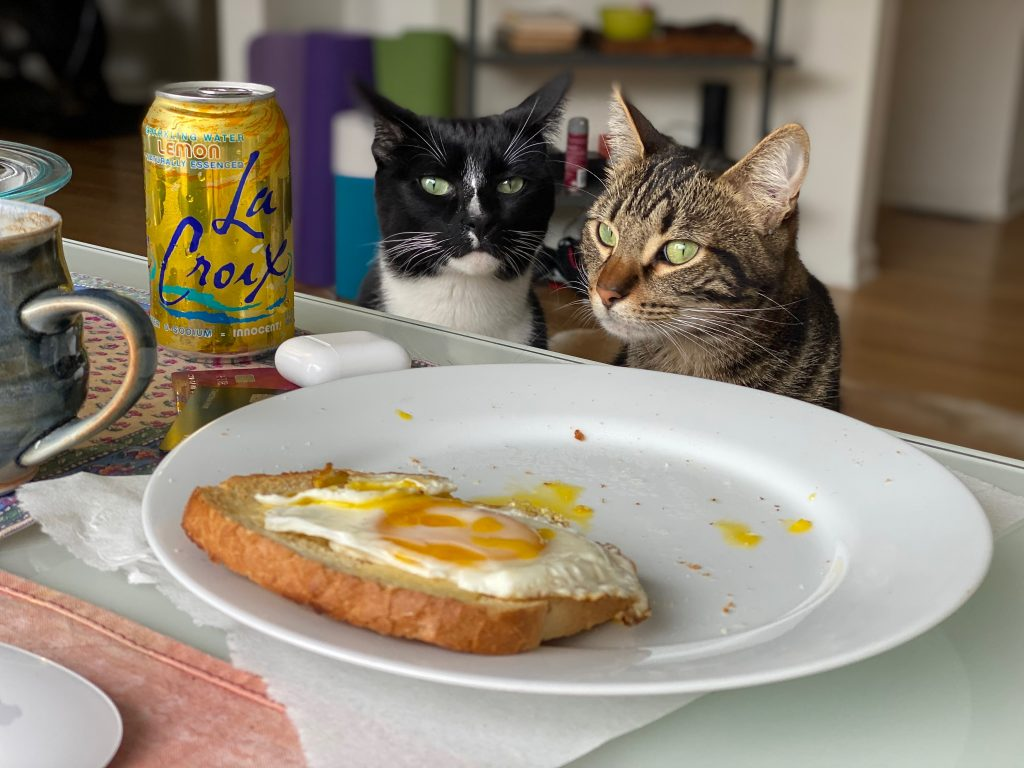 Two cats looking wistfully at breakfast of eggs on toast